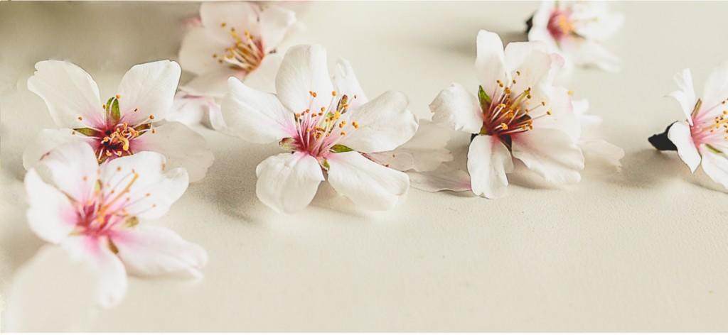 Blossom panorama